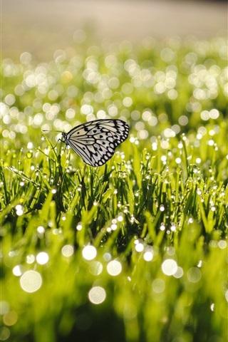 iPhone Wallpaper Summer, grass, after rain, butterfly, water drops