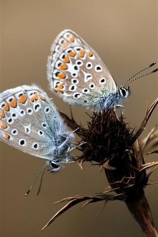 iPhone Wallpaper Three butterflies, plant