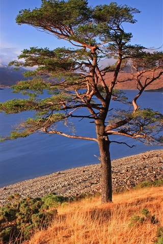 iPhone Wallpaper Trees, grass, lake, mountains