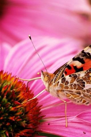 iPhone Wallpaper Two butterflies, one pink flower