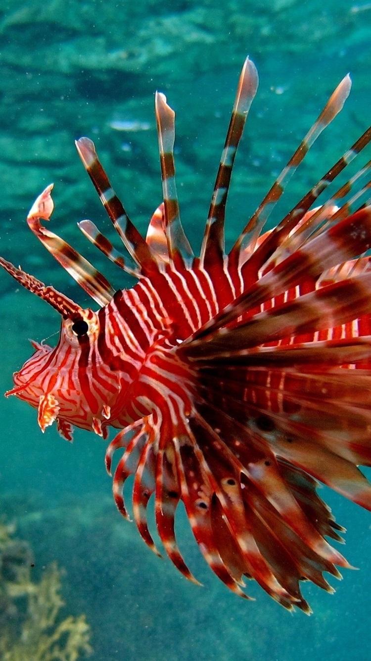 Wallpaper Underwater, red color fish, water, sea 2560x1600 HD ...