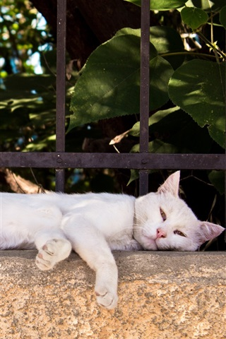 iPhone Wallpaper White cat lying on fence side