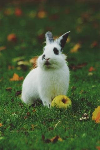 iPhone Wallpaper White rabbit, apple, green grass, leaves