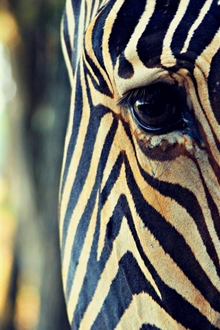 iPhone Wallpaper Zebra head close-up, eye