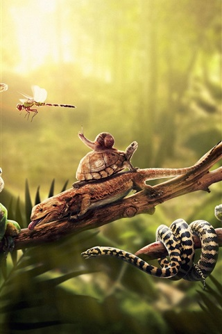 iPhone Wallpaper Animals, lizard, snake, iguana, frog, dragonfly, turtle and snail