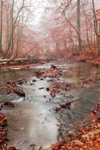 iPhone Обои Осень, лес, река, красные листья, туман
