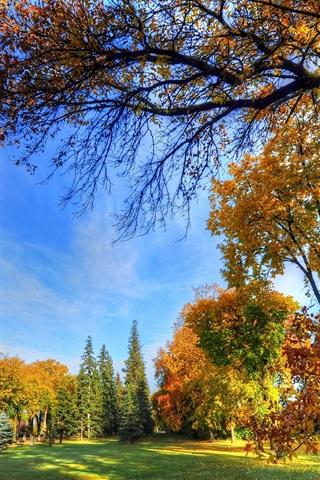 iPhone Wallpaper Autumn park, trees, grass, bench, sunshine, blue sky