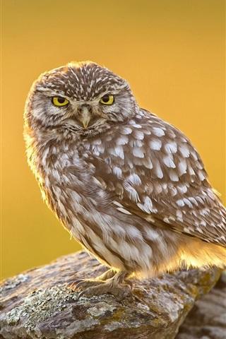 iPhone Wallpaper Bird close-up, owl, stones, sunshine