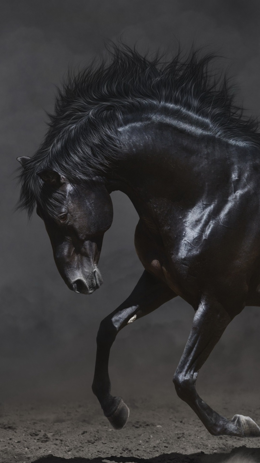 Black Horse Run In The Dark 1080x1920 Iphone 8 7 6 6s Plus
