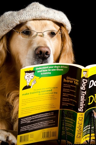 iPhone Wallpaper Dog reading book, funny animals