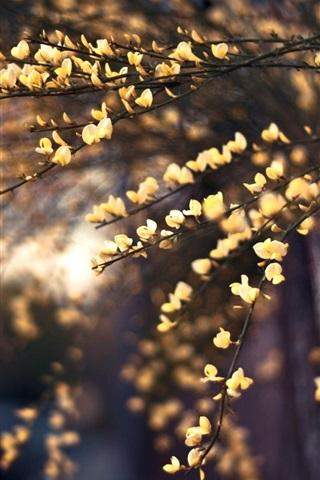 iPhone Wallpaper Fence, yellow flowers, twigs, bokeh