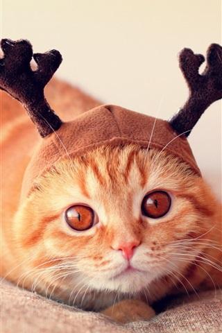 iPhone Wallpaper Funny cat, hat, horns