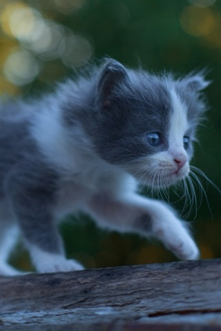 iPhone Wallpaper Furry kitten baby walk