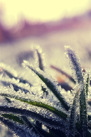 iPhone Wallpaper Grass, frost, ice crystals, cold