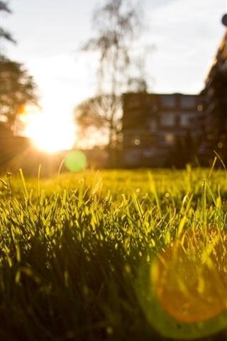 iPhone Wallpaper Grass, sun rays, glare