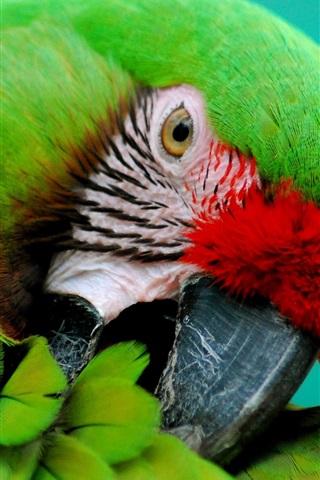 iPhone Wallpaper Green parrot close-up, beak