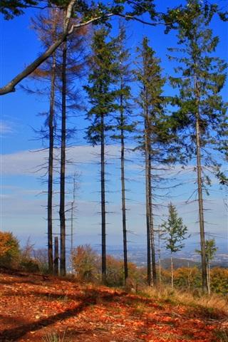 iPhone Wallpaper High trees, mountain, nature