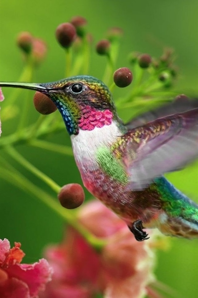 птицы фото для смартфона протяжении