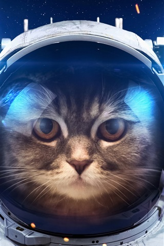 iPhone Wallpaper Humor, cat as a astronaut, space, light