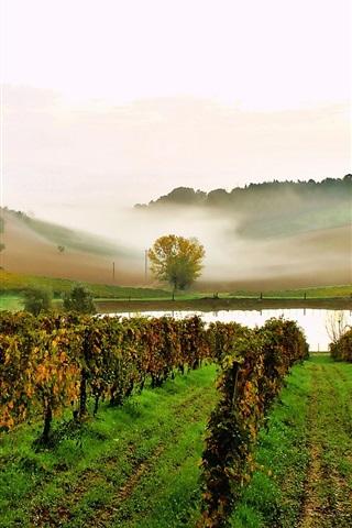 iPhone Wallpaper Italy, vineyard, pond, slope, fog