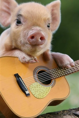 iPhone Wallpaper Little pig and guitar