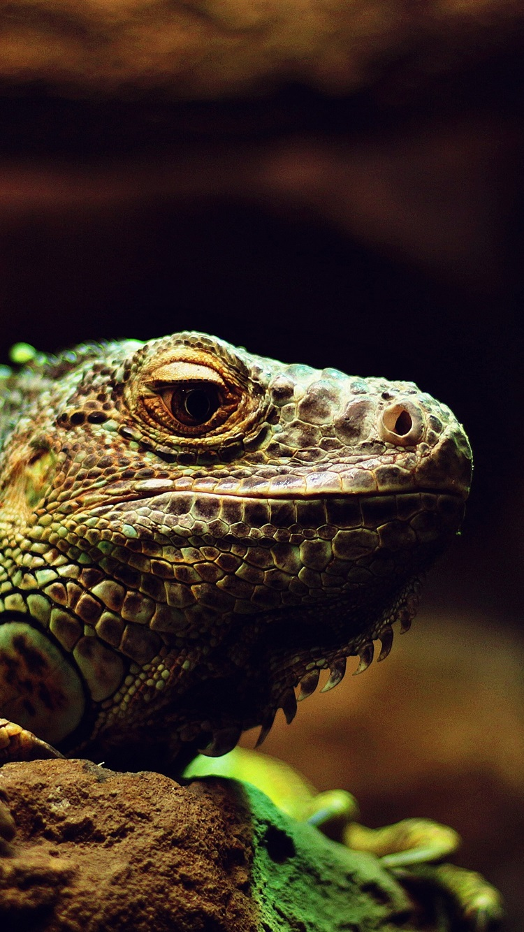 Wallpaper Lizard, reptile, macro photography 3840x2160 UHD ...