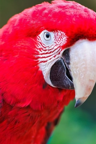 iPhone Wallpaper Macaw, parrot, beak, branch