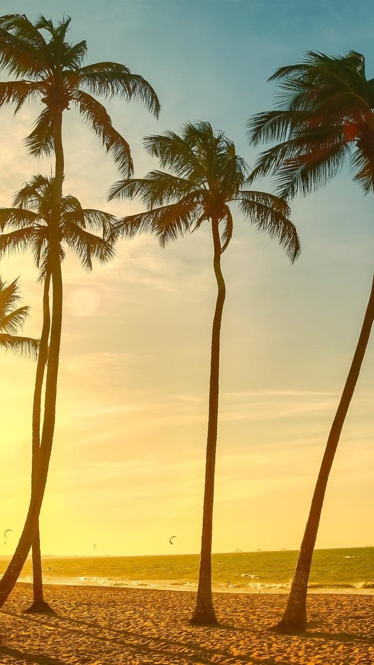 壁紙 ヤシの木 海 浜 夕日 2560x1440 Qhd 無料のデスクトップの背景
