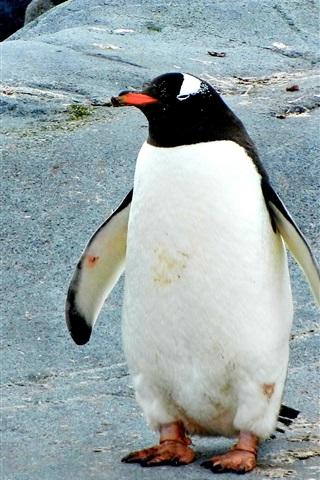 iPhone Wallpaper Penguin standing on stones