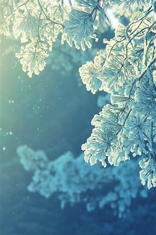 iPhone Wallpaper Pine twigs, snow, winter