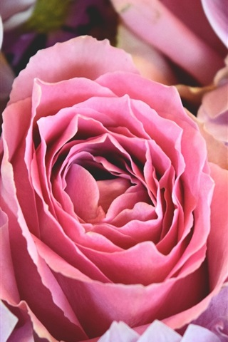 iPhone Wallpaper Pink rose and daisy flowers