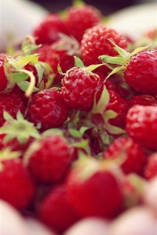 iPhone Wallpaper Red berries in hands