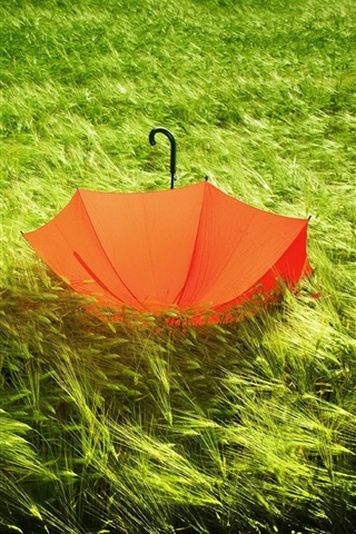 iPhone Wallpaper Red umbrella in the grass