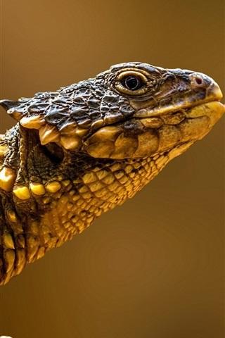 iPhone Wallpaper Reptiles, lizard side view