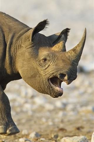 iPhone Wallpaper Rhinoceros run