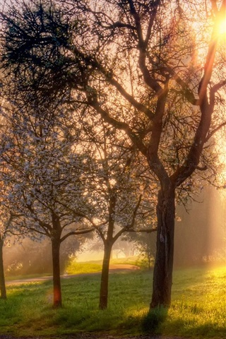 iPhone Wallpaper Spring, trees, flowers, grass, sun rays