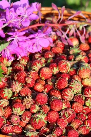 iPhone Wallpaper Strawberry, basket, fresh fruit