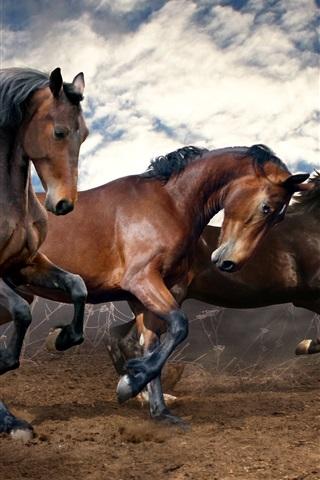 iPhone Wallpaper Three brown horses run