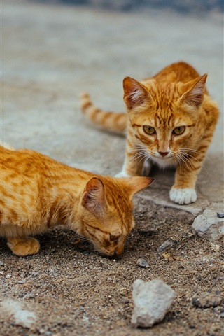 iPhone Wallpaper Two cute striped kittens