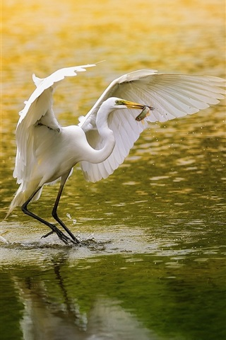 iPhone Wallpaper White bird, egret, fishing, lake, water