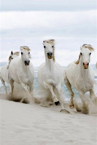 iPhone Wallpaper White horses running, sands, sea