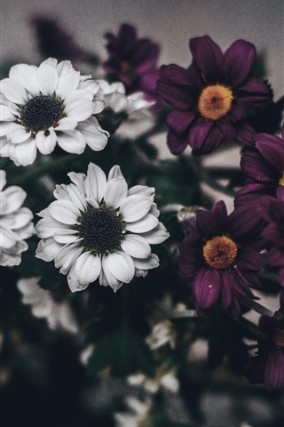 iPhone Wallpaper White purple flowers, bouquet