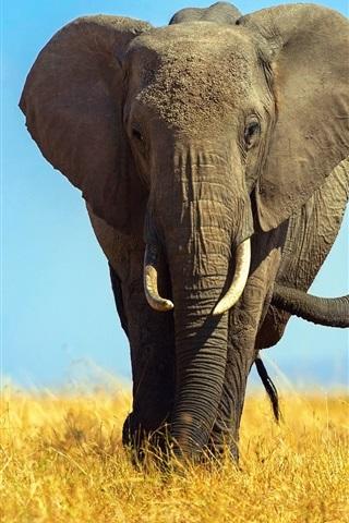 iPhone Wallpaper Africa, elephants, cub