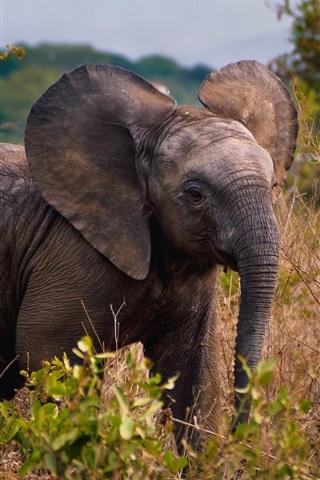 iPhone Wallpaper African, elephant cub, wildlife