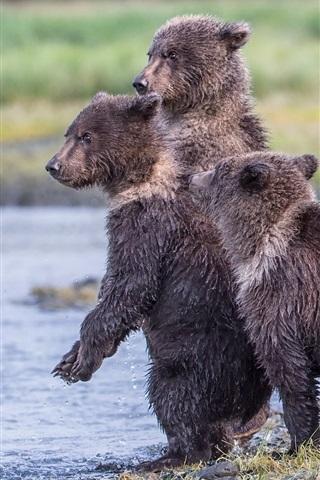iPhone Wallpaper Alaska, Katmai National Park, lake, three wet bear cubs
