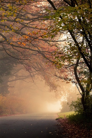 iPhone Wallpaper Autumn, forest, trees, road, fog, leaves