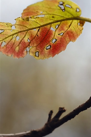 iPhone Wallpaper Autumn, one leaf, twigs