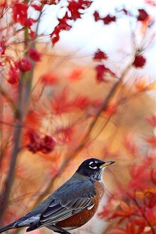 iPhone Wallpaper Autumn, trees background, bird