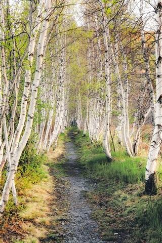 iPhone Wallpaper Birch forest, grass, path, nature