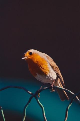 iPhone Wallpaper Bird, wire fence